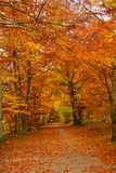 Fall in a park Royalty Free Stock Photo