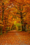 Fall in a park Royalty Free Stock Images
