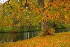 Fall in a park Stock Photos