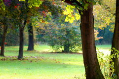 Fall in the park with green trees under blue sky Royalty Free Stock Photography