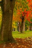 Fall Park Perspective Royalty Free Stock Image