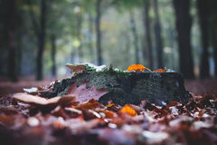 Fall in a park Selective Focus.  Stock Photo