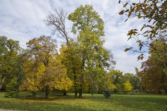 Fall in the park and trees Stock Images