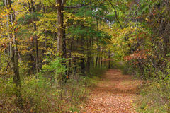 Fall Path Royalty Free Stock Image