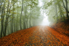 Fall path Royalty Free Stock Images