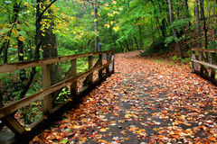 Fall Path. A wooden bridge covered in leaves that leads in to a walking path royalty free stock photography