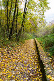 Fall path Royalty Free Stock Photos