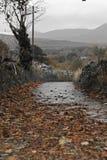Fall path Stock Photo