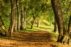 Fall path in forest Stock Photos