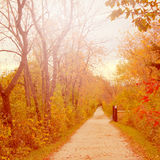 Fall path Stock Images