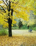 Fall Path. Leaf covered path with black wrought iron bench under trees with bright yellow leaves Stock Photos