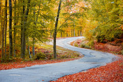 Fall path Royalty Free Stock Photo