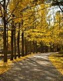 Fall Path stock photos