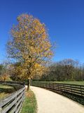 Fall path. Winding white gravel path, with bright yellow tree in center, late fall trees in background, and pastures on both sides Stock Photo