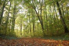 Fall pathway Stock Image