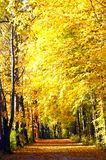 Fall Pathway. A secluded pathway takes one through beautiful autumn leaves Stock Photo