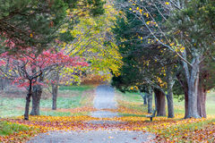 Fall Pathway. How about a beautiful, Autumn, walk?  Multiple Fall colors frame this pathway Royalty Free Stock Photos