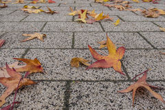 Fall pavement Royalty Free Stock Images