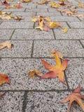 Fall pavement Stock Image