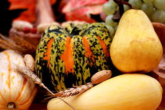 Fall pears and pumpkins Royalty Free Stock Images