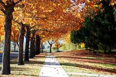 Fall Perfection Stock Photo