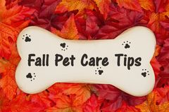 Fall Pet Care Tips on wood dog bone on fall leaves royalty free stock images