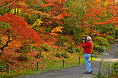 Fall Photography and Photographer stock photography