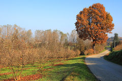 Fall in Piedmont. Stock Photography