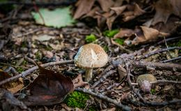 Fall-Pilz Stockfotos