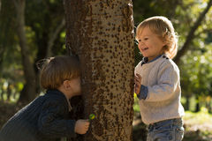Fall playing hide and seek. Little boys playing hide and seekin autumn park stock photos