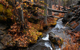 Fall At the Pole. Pole Creek in autumn - near Sisters, OR stock image