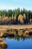 Fall Pond Royalty Free Stock Photo