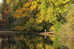 Fall Pond Stock Photos