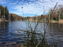 Fall pond scene. Pond and fall leaves Stock Image