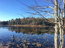 Fall pond scene. Pond and fall leaves Royalty Free Stock Photography