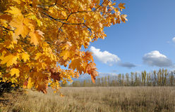 Fall postcard. Red - yellow maple leaves. Against a background of a blue sky royalty free stock photos
