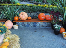 Fall produce on a Thanksgiving display Royalty Free Stock Images