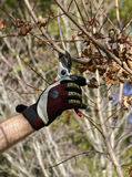 Fall Pruning of a Maple Tree Royalty Free Stock Photos