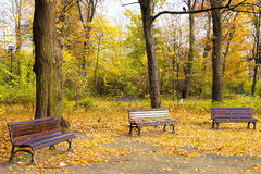 Fall in public park Royalty Free Stock Photography