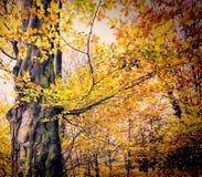 Fall in public park Royalty Free Stock Photos