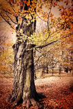 Fall in public park Royalty Free Stock Images