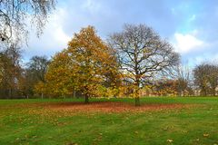 Fall in a Public Park in London. Trees scene in St. James Park in London Royalty Free Stock Photo