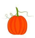 Fall pumpkin Royalty Free Stock Image