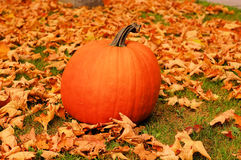 Fall Pumpkin. A single pumpkin sits amongst fallen leaves.  It is Autumn in the picture Royalty Free Stock Photos