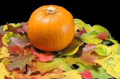 Free Fall Pumpkin Stock Photo - 3831660