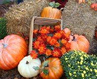 Fall pumpkin arrangement Royalty Free Stock Photo