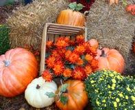 Fall pumpkin arrangement Royalty Free Stock Photo