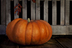 Fall Pumpkin. A Cinderella pumpkin also known as the Rouge vif D'Etampes pumpkin in front of rustic wood slats royalty free stock images