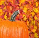 Fall Pumpkin Closeup Royalty Free Stock Image