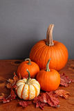Fall Pumpkin and Decorative Squash Stock Image